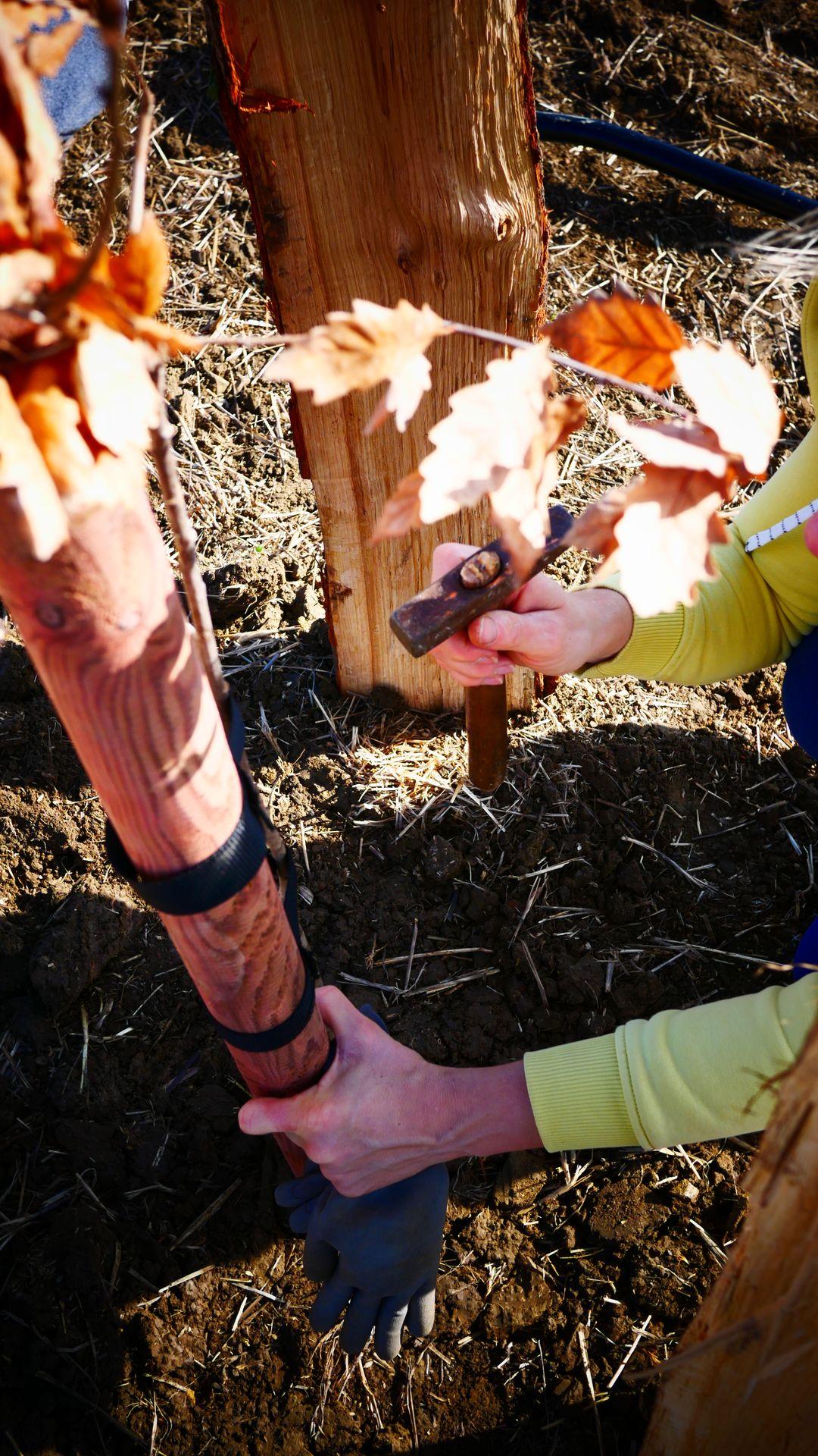 Výsadba stromů TOFL